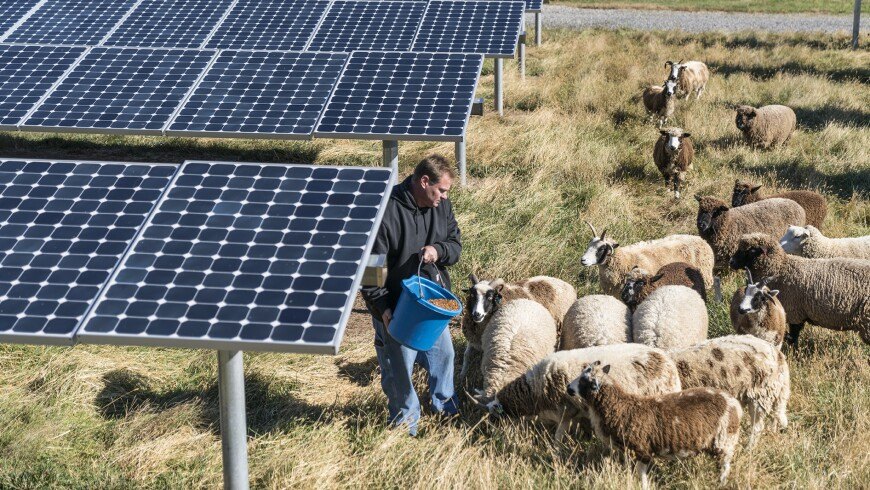 Solar Panels and Lawn Grazing Sheep at the Janssen U.S. Headquarters in Titusville, N.J.