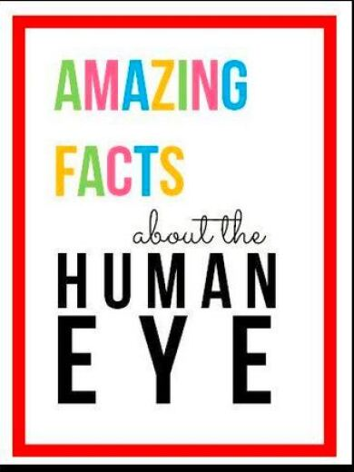 Just For Kids Amazing Facts About The Human Eye Johnson Johnson