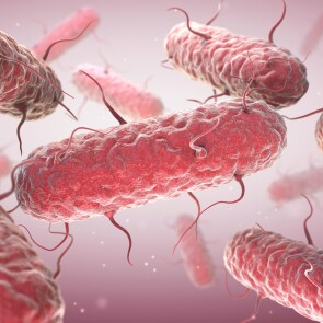 A microscopic view of the E. coli bacteria