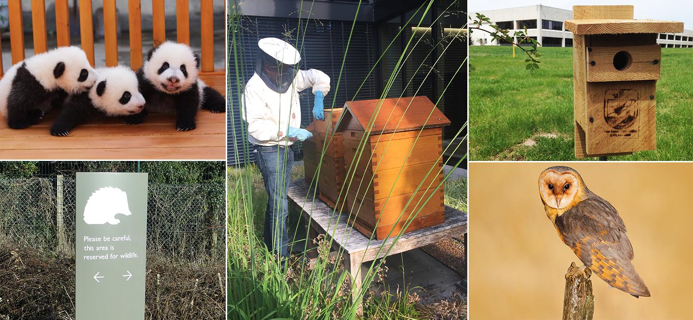Collage of several Johnson & Johnson animal conservation programs
