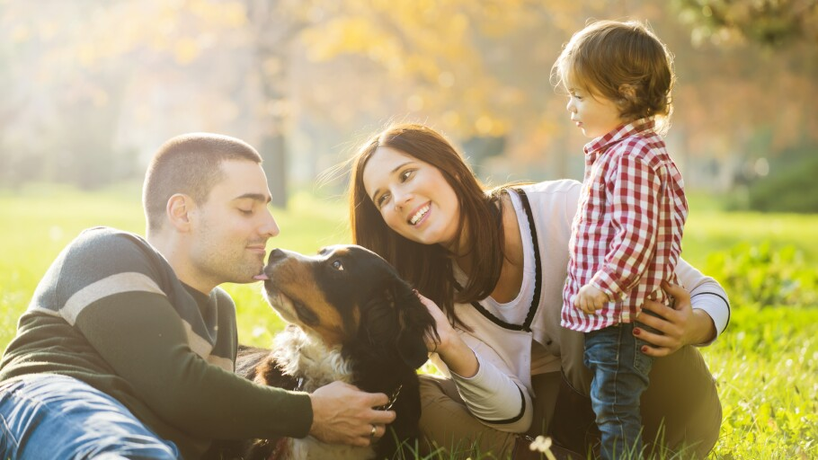 A photo of parents with their son and dog