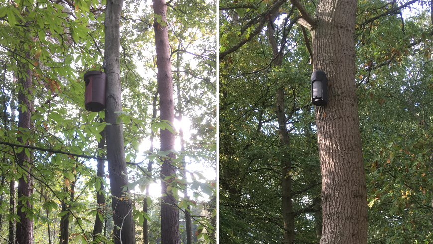 Two photographs of an owl box on a tree and a bat box on a tree