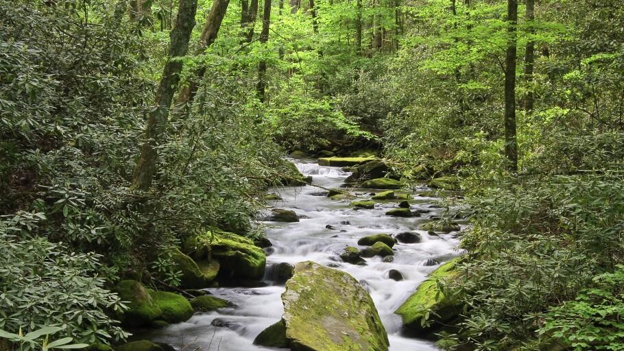 Joyce Kilmer Memorial Forest in North Carolina