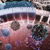 Immunology of the Gut Mucosa