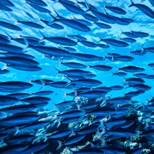 A photo of a school of fish underwater