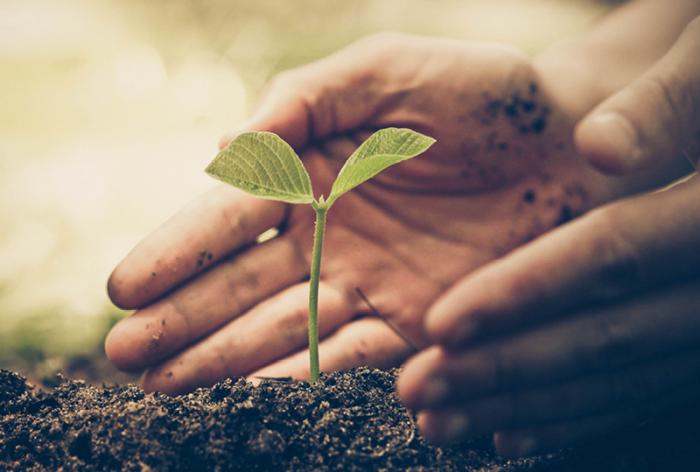 Close up of hands nurturing a plant seedling