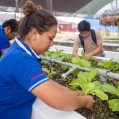 Johnson & Johnson employees at a Peru greenhouse